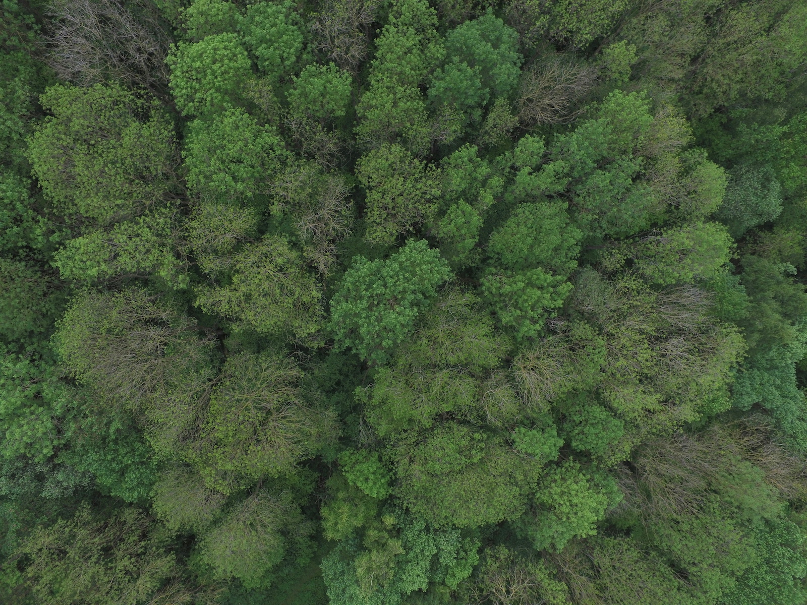 Aerial Imagery - Trees